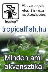 Tropical-fish